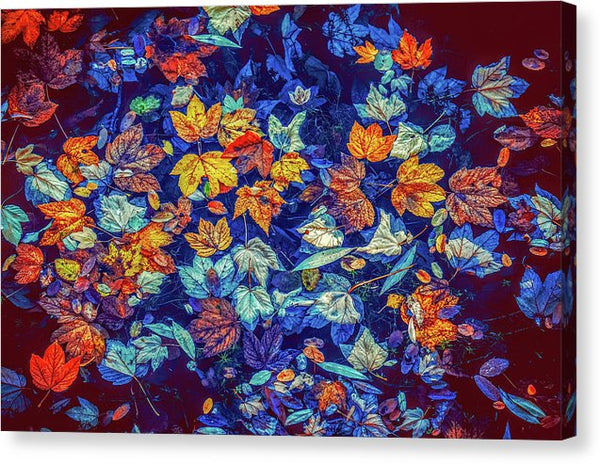 Colorful Fall Leaves In Water - Canvas Print from Wallasso - The Wall Art Superstore