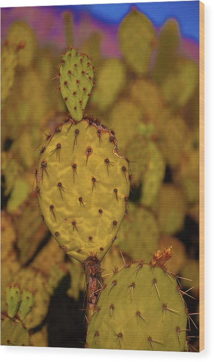 Colorful Prickly Pear Paddle Cactus Thorns - Wood Print from Wallasso - The Wall Art Superstore