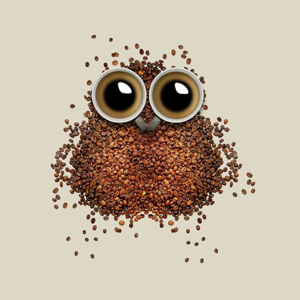 Cute Coffee Bean Owl - Art Print from Wallasso - The Wall Art Superstore