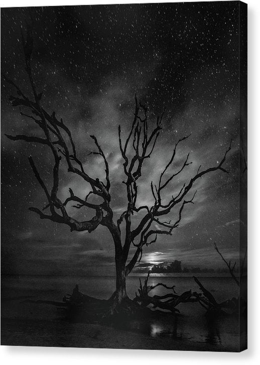 Dead Tree and Stars In Night Sky - Canvas Print from Wallasso - The Wall Art Superstore