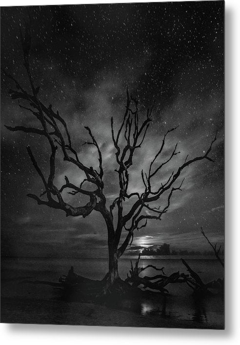 Dead Tree and Stars In Night Sky - Metal Print from Wallasso - The Wall Art Superstore