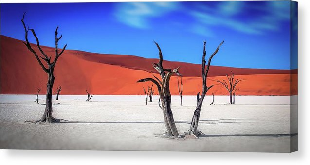Dead Vlei Tree Skeletons of The Namib Desert - Canvas Print from Wallasso - The Wall Art Superstore