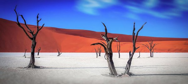 Dead Vlei Tree Skeletons of The Namib Desert - Art Print from Wallasso - The Wall Art Superstore