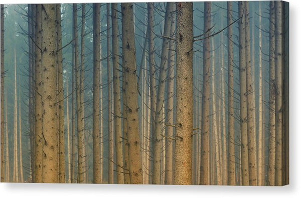 Dense Forest Tree Trunks - Canvas Print from Wallasso - The Wall Art Superstore