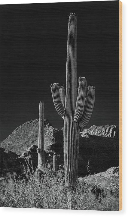 Dramatic Saguaro Cactus and Mountain - Wood Print from Wallasso - The Wall Art Superstore