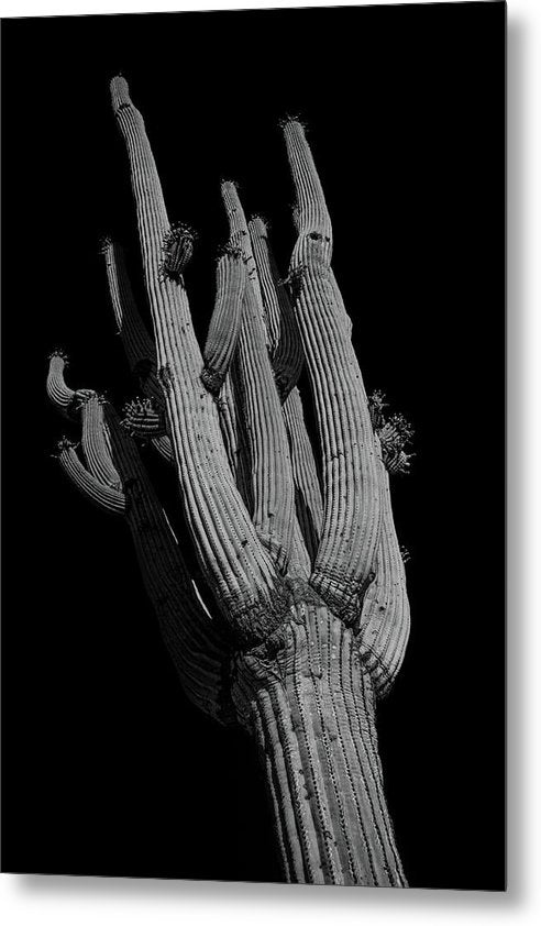 Dramatic Saguaro Cactus, Looking Up - Metal Print from Wallasso - The Wall Art Superstore