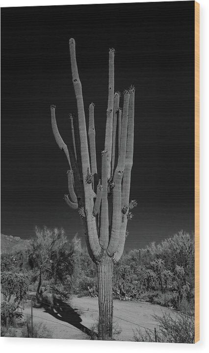 Dramatic Saguaro Cactus With Many Arms - Wood Print from Wallasso - The Wall Art Superstore