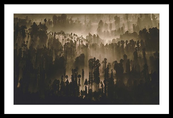 Foggy Backlit Forest - Framed Print from Wallasso - The Wall Art Superstore