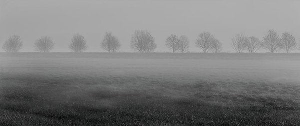 Foggy Trees Panorama - Art Print from Wallasso - The Wall Art Superstore