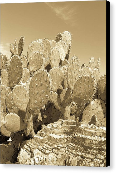 Gold Tone Prickly Pear Paddle Cactus - Canvas Print from Wallasso - The Wall Art Superstore