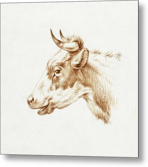 Head of A Cow With Horns by Jean Bernard, 1820 - Metal Print from Wallasso - The Wall Art Superstore