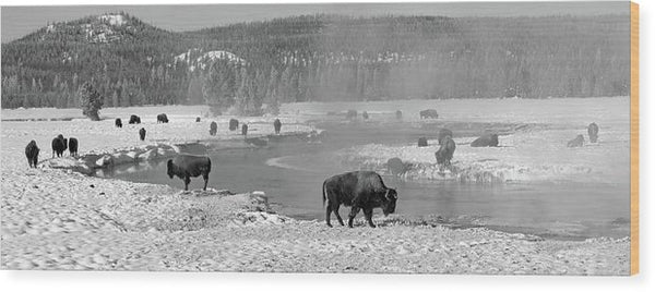 Herd of Buffalo At Snowy River, Panorama - Wood Print from Wallasso - The Wall Art Superstore