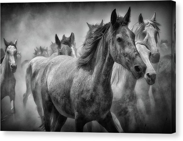 Horses Running, Black and White - Canvas Print from Wallasso - The Wall Art Superstore