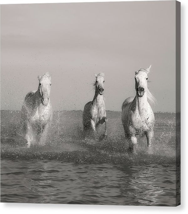 Horses Running In Water, Sepia - Canvas Print from Wallasso - The Wall Art Superstore
