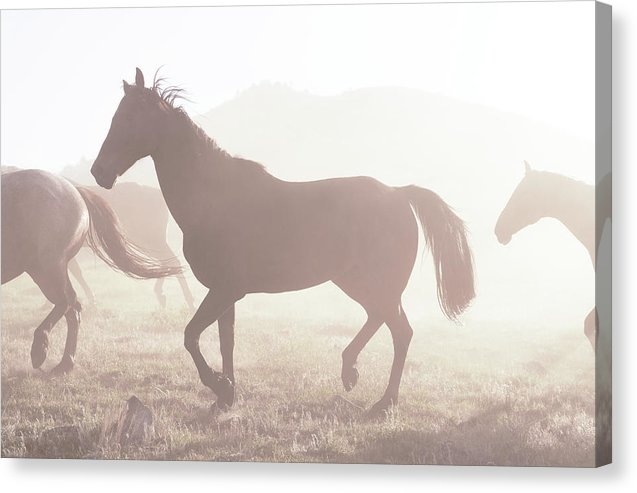 Horse Silhouette In Sunlight - Canvas Print from Wallasso - The Wall Art Superstore