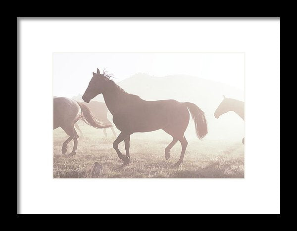 Horse Silhouette In Sunlight - Framed Print from Wallasso - The Wall Art Superstore