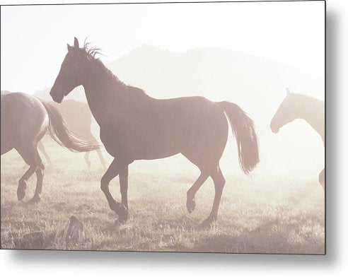 Horse Silhouette In Sunlight - Metal Print from Wallasso - The Wall Art Superstore