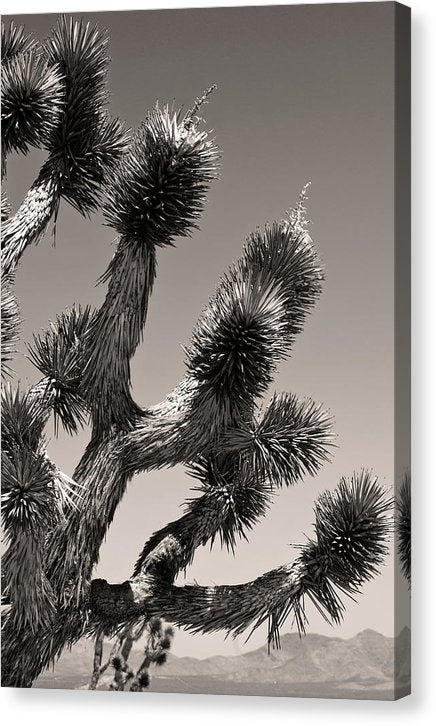 Joshua Tree National Park Yucca, Closeup - Canvas Print from Wallasso - The Wall Art Superstore