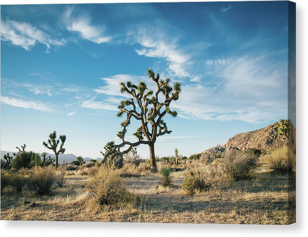 Joshua Tree National Park Yucca - Canvas Print from Wallasso - The Wall Art Superstore