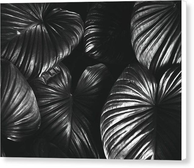 Large Black and White Leaves - Canvas Print from Wallasso - The Wall Art Superstore