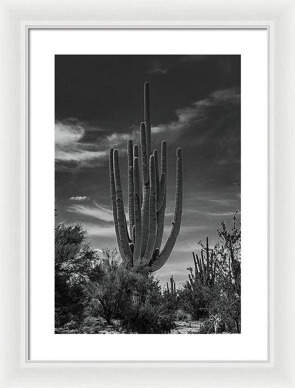Large Saguaro Cactus With Many Arms - Framed Print from Wallasso - The Wall Art Superstore
