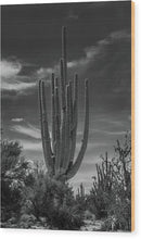 Large Saguaro Cactus With Many Arms - Wood Print from Wallasso - The Wall Art Superstore