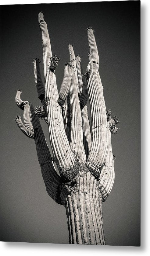 Looking Up At Saguaro Cactus - Metal Print from Wallasso - The Wall Art Superstore