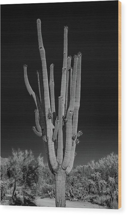 Many Arms On Dramatic Saguaro Cactus - Wood Print from Wallasso - The Wall Art Superstore