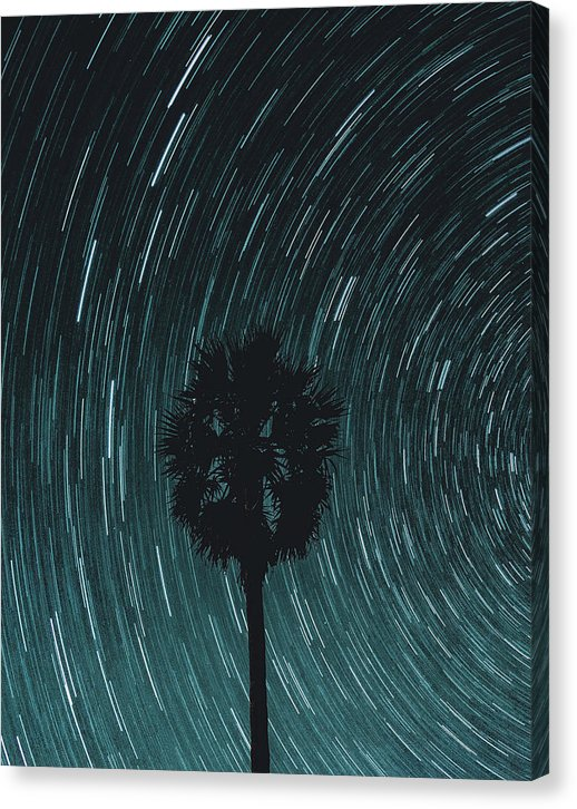Palm Tree With Star Trails - Canvas Print from Wallasso - The Wall Art Superstore
