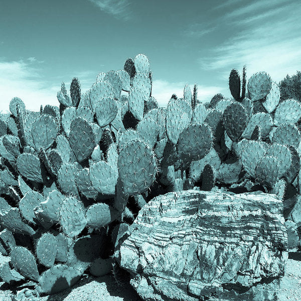 Prickly Pear Paddle Cactus, Blue Tone - Art Print from Wallasso - The Wall Art Superstore