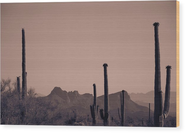 Red Toned Saguaro Cactus Desert Vista - Wood Print from Wallasso - The Wall Art Superstore