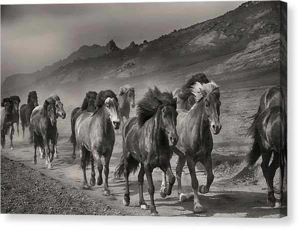 Running Horses, Sepia - Canvas Print from Wallasso - The Wall Art Superstore