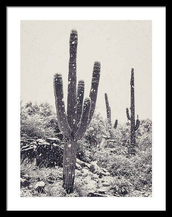 Saguaro Cactus In Snow - Framed Print from Wallasso - The Wall Art Superstore
