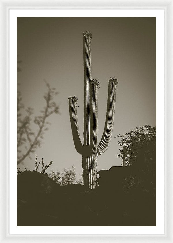 Saguaro Cactus, Sepia - Framed Print from Wallasso - The Wall Art Superstore