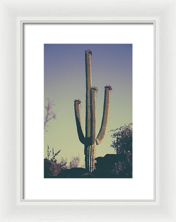 Saguaro Cactus With Subtle Purple Tones - Framed Print from Wallasso - The Wall Art Superstore