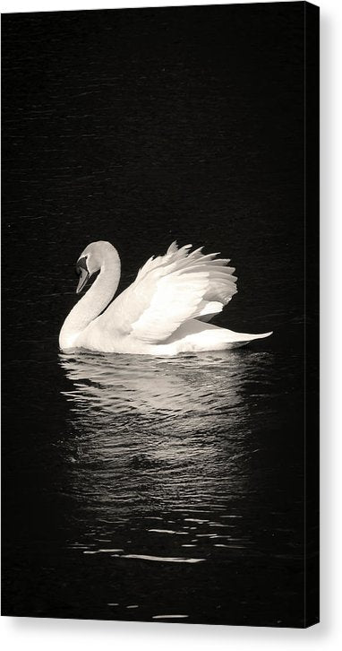 Sepia Elegant Swan, Vertoramic - Canvas Print from Wallasso - The Wall Art Superstore