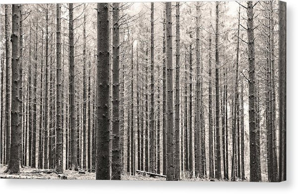 Sepia Forest of Tree Trunks - Canvas Print from Wallasso - The Wall Art Superstore