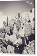 Sepia Prickly Pear Paddle Cactus, Portrait - Acrylic Print from Wallasso - The Wall Art Superstore