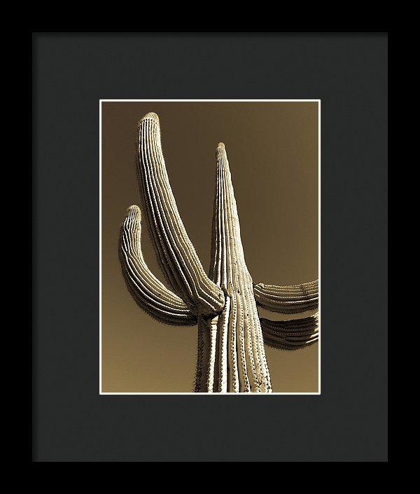 Sepia Tone Saguaro Cactus Near Tucson, Arizona - Framed Print from Wallasso - The Wall Art Superstore