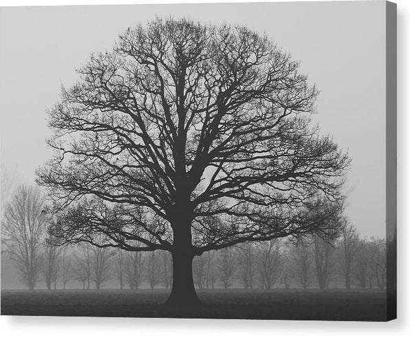Silhouette of Tree In Fog - Canvas Print from Wallasso - The Wall Art Superstore
