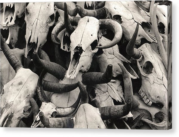 Stacked Cow Skulls, Sepia - Canvas Print from Wallasso - The Wall Art Superstore