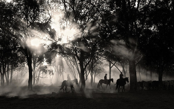 Sunlight Streaming Through Trees With Cowboys and Horses, Sepia - Art Print from Wallasso - The Wall Art Superstore
