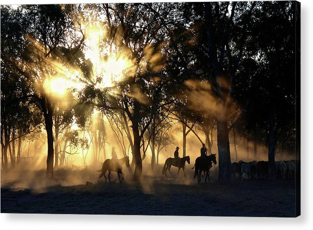 Sunlight Streaming Through Trees With Cowboys and Horses - Acrylic Print from Wallasso - The Wall Art Superstore