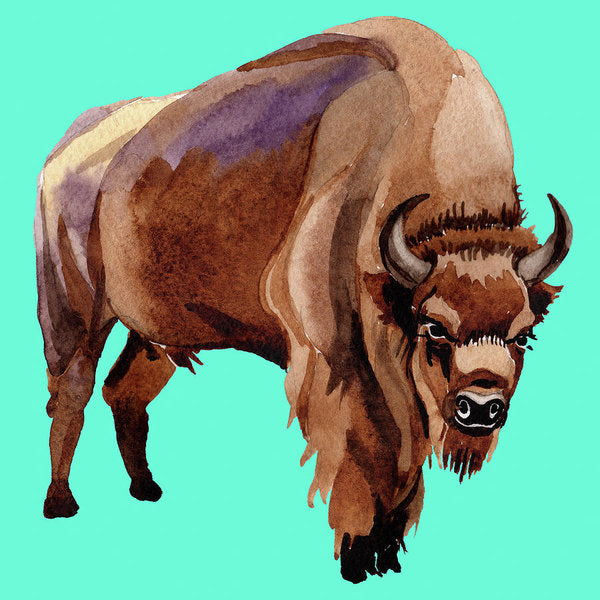 Teal Pop Art Buffalo Watercolor Painting - Art Print from Wallasso - The Wall Art Superstore