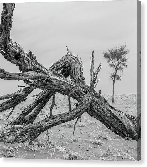 Twisted and Fallen Dead Tree Trunk - Canvas Print from Wallasso - The Wall Art Superstore