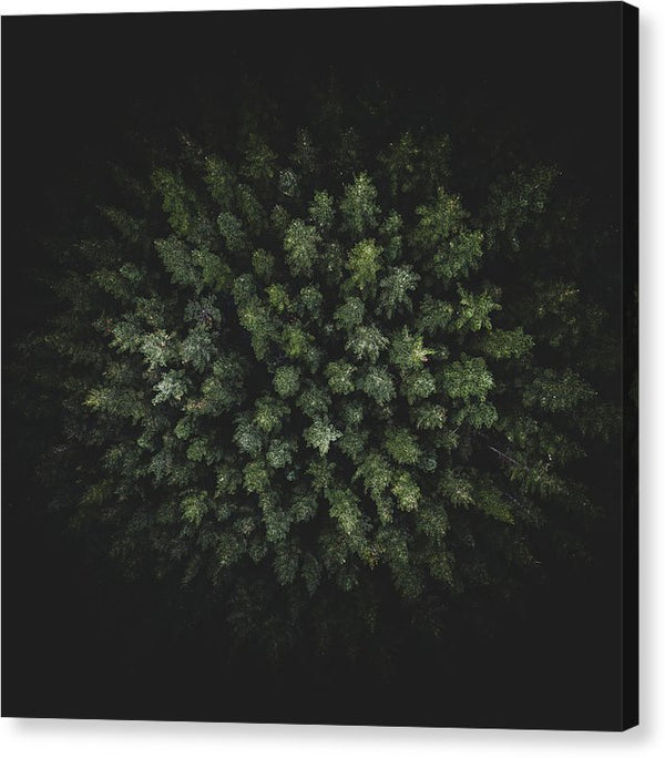 Unique Birdseye View of Forest Trees - Canvas Print from Wallasso - The Wall Art Superstore
