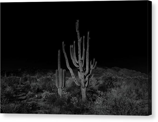 Unique Saguaro Cactus With Many Arms Landscape - Canvas Print from Wallasso - The Wall Art Superstore