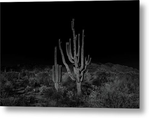 Unique Saguaro Cactus With Many Arms Landscape - Metal Print from Wallasso - The Wall Art Superstore