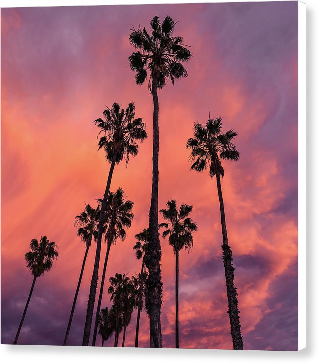 Vibrant Sunset With Silhouetted Palm Trees - Canvas Print from Wallasso - The Wall Art Superstore