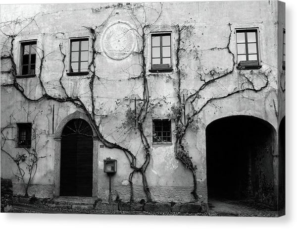 Vines Creeping Up Old Stone Wall - Canvas Print from Wallasso - The Wall Art Superstore
